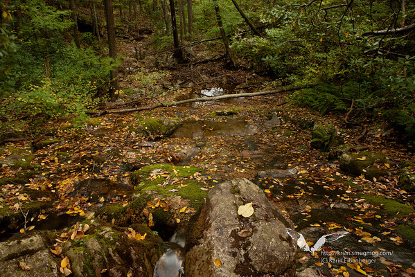 October 2011. Blue Ridge Mountains, St. Mary's Wilderness.
