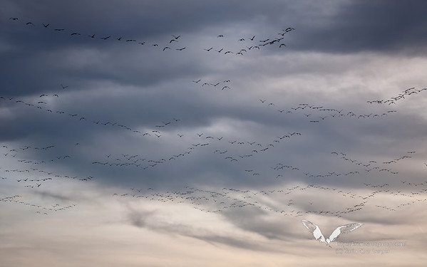 November 2011. Prime Hook Wildlife Refuge, East Coast of Maryland.