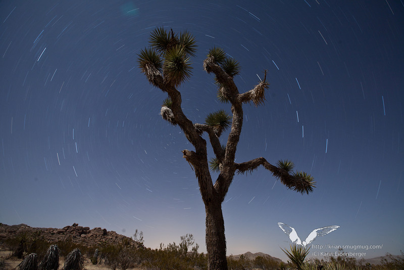 March 2012. Star rails and a Joshua Tree.